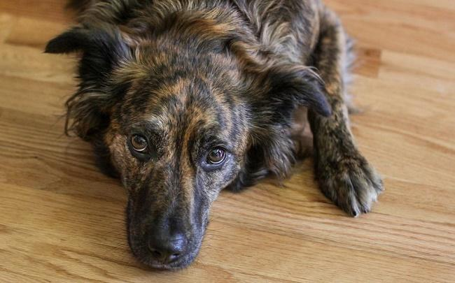 What Should I Give My Dog for Pain Relief