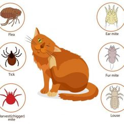 A Brief Guide on How to Get Rid of Fleas on Housecats