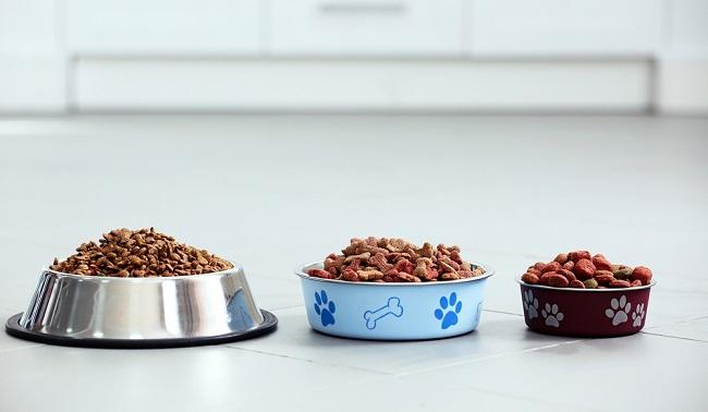 What is the Right Percentage of Protein in Dog Food