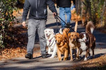 find-dog-walking-jobs-near-me