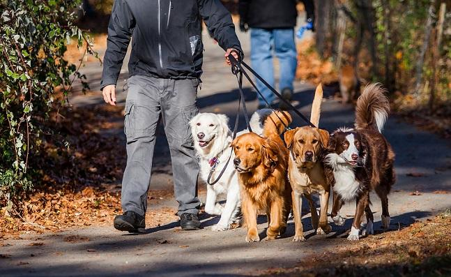 Dog Walking Jobs Near Me How To Become A Dog Walker