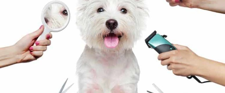 Best Dog Grooming Clippers For Westies 2019