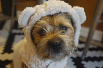 Best Dog Clippers for Border Terriers