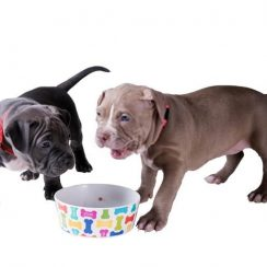 Best Food for Pitbull Puppy