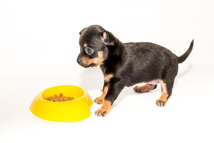 Food For Doberman Puppies