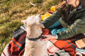 Best Dog Training Shock Collar