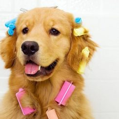 Doggy Styling Grooming