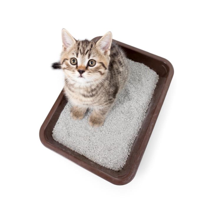 Most Environmentally Friendly Cat Litter