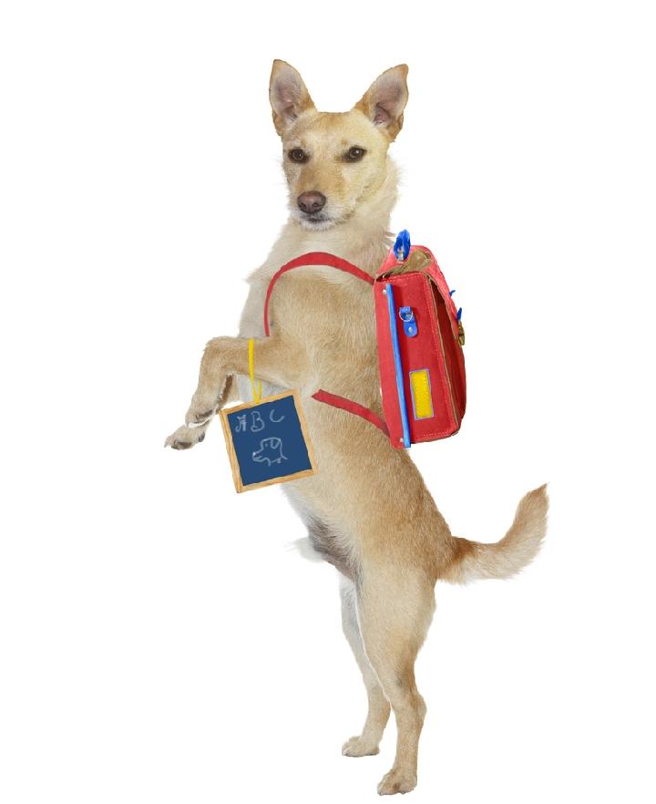 Best Dog Backpack for Hiking