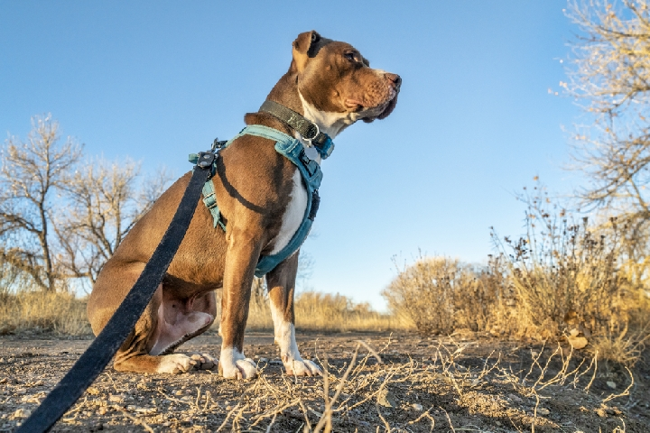 Best Dog Harness For Hiking